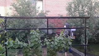 Обработка плодовых деревьев от вредителей